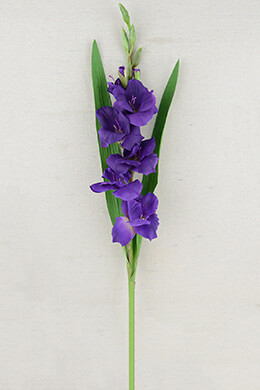 Gladiolus Flower Purple 33in