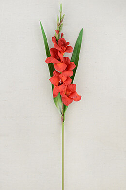 Gladiolus Flower Red 33in
