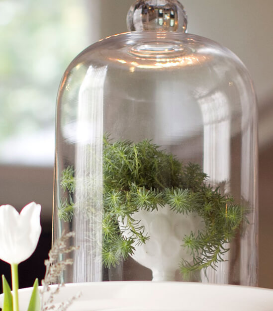 Glass Bell Jars  (set of 2)  $30