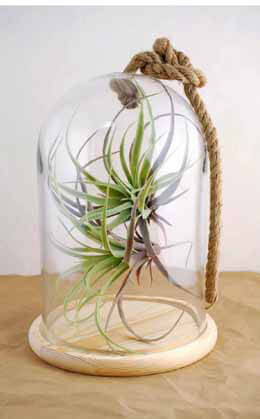 "Bell Jar with Rope & Wood Base  12"" Nautical"
