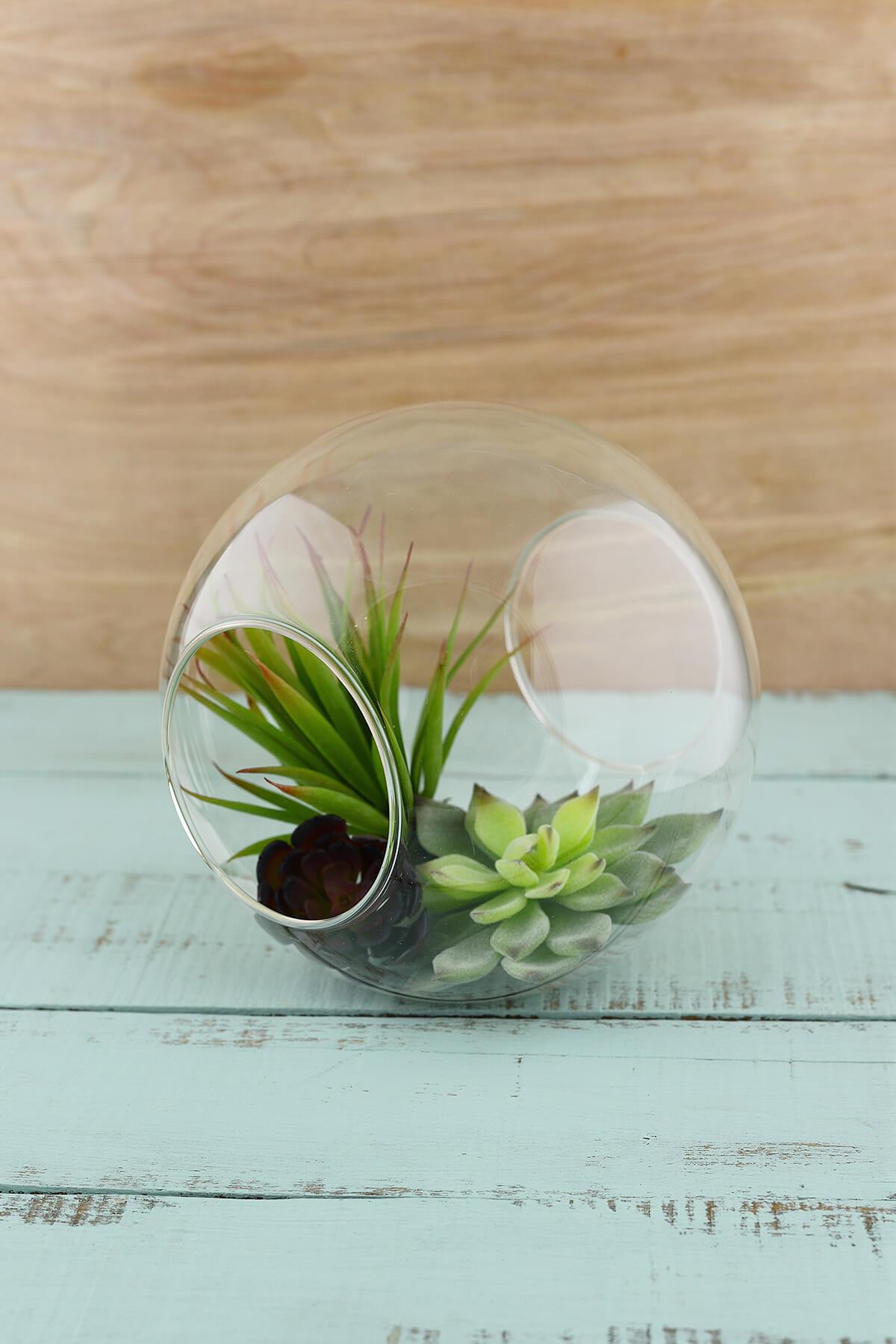 Glass Terrarium Globe 7in