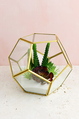 "Hira Glass & Brass Terrarium Display Box 7.5""x 7.5"""