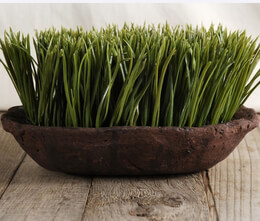 Grass Display Green Grass in Stone Bowl 11in