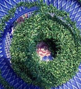 Green Miniture Berry 25' Garland