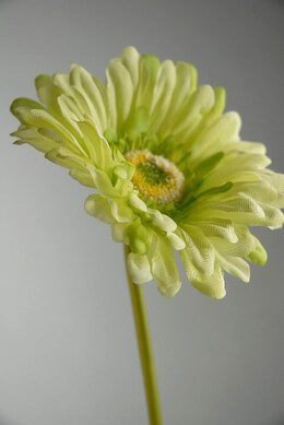Silk Gerbera Daisy Bouquet Green (24 flowers)