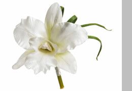 Groomsmen Boutonniere Silk White Orchid with pin