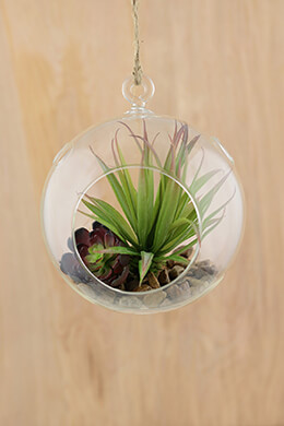 Hanging Glass Globes 6in