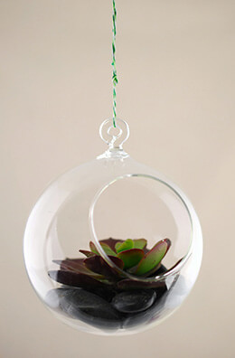 Hanging Glass Terrarium 4in