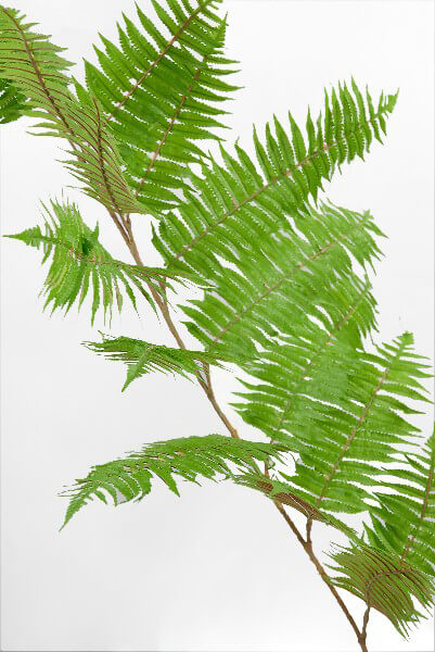 Hawaiian Tree Fern 36x20 Branch Artificial