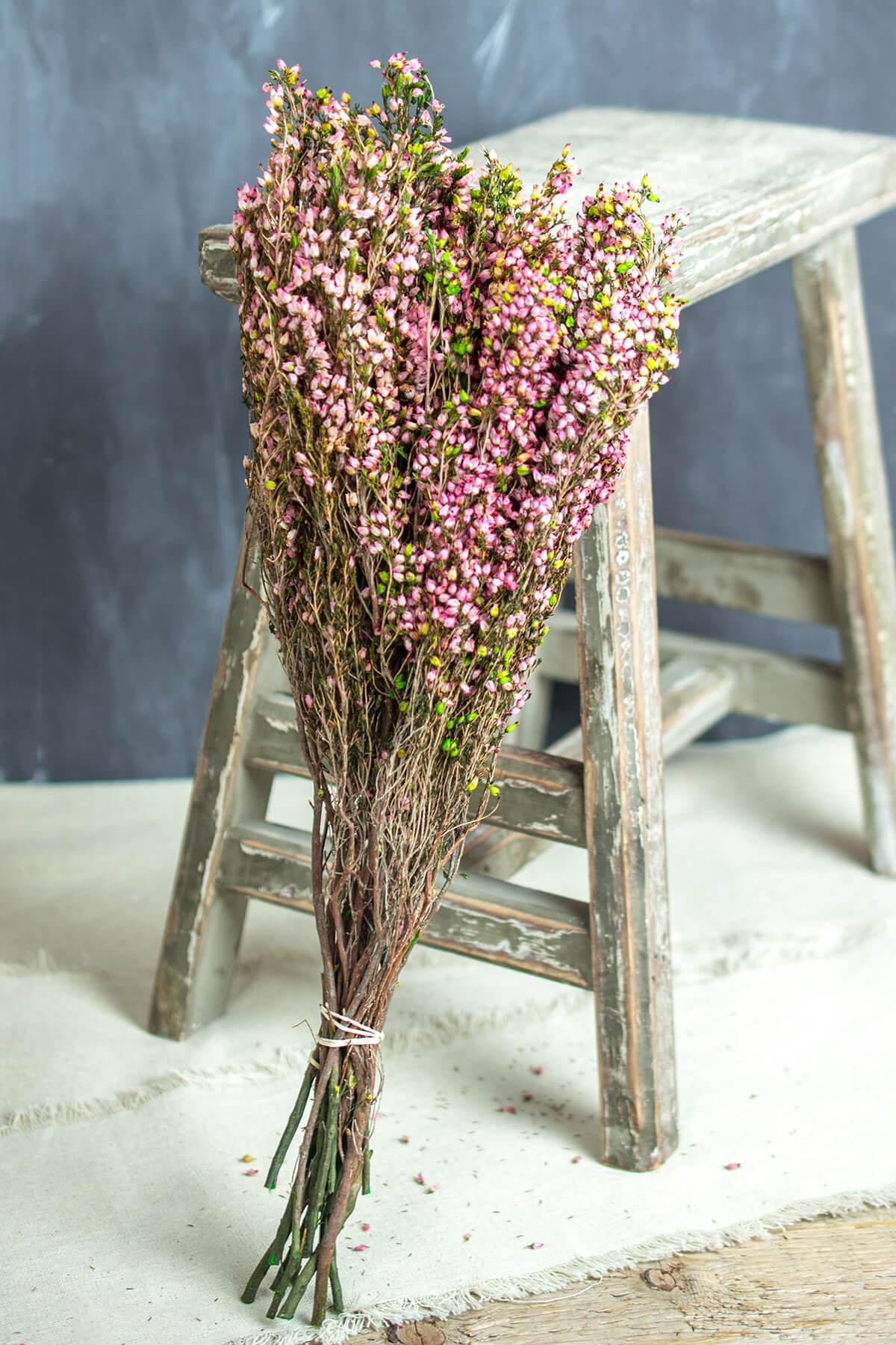 South African Erica, Pink Heather Bundle 4-5oz