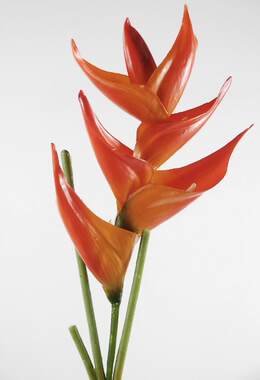 Heliconia 33 in. Natural Touch