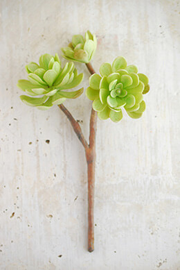 Hen-and-Chicks Stem in Green 10in