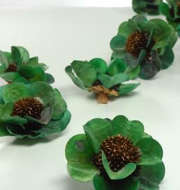 Himalayan Green Roses (18 flower )