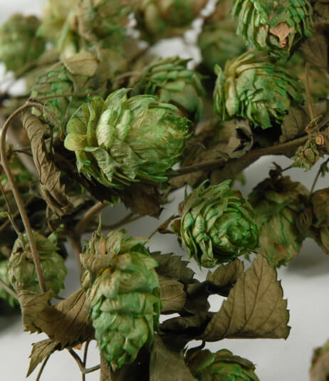 """Natural Hops Garland Air Dried 18"""""""