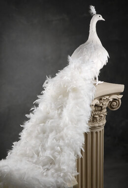 Giant White Artificial Peacock with Curly Feathers 54in
