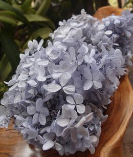 Hydrangea Flowers Lavender Preserved (2 flowers)