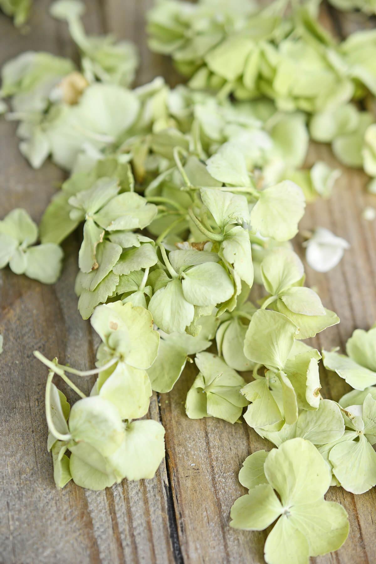 Eco Friendly Preserved Green Hydrangea Petals- 5 cups