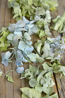 Eco Friendly Preserved Green & Blue Hydrangea Petals- 5 cups