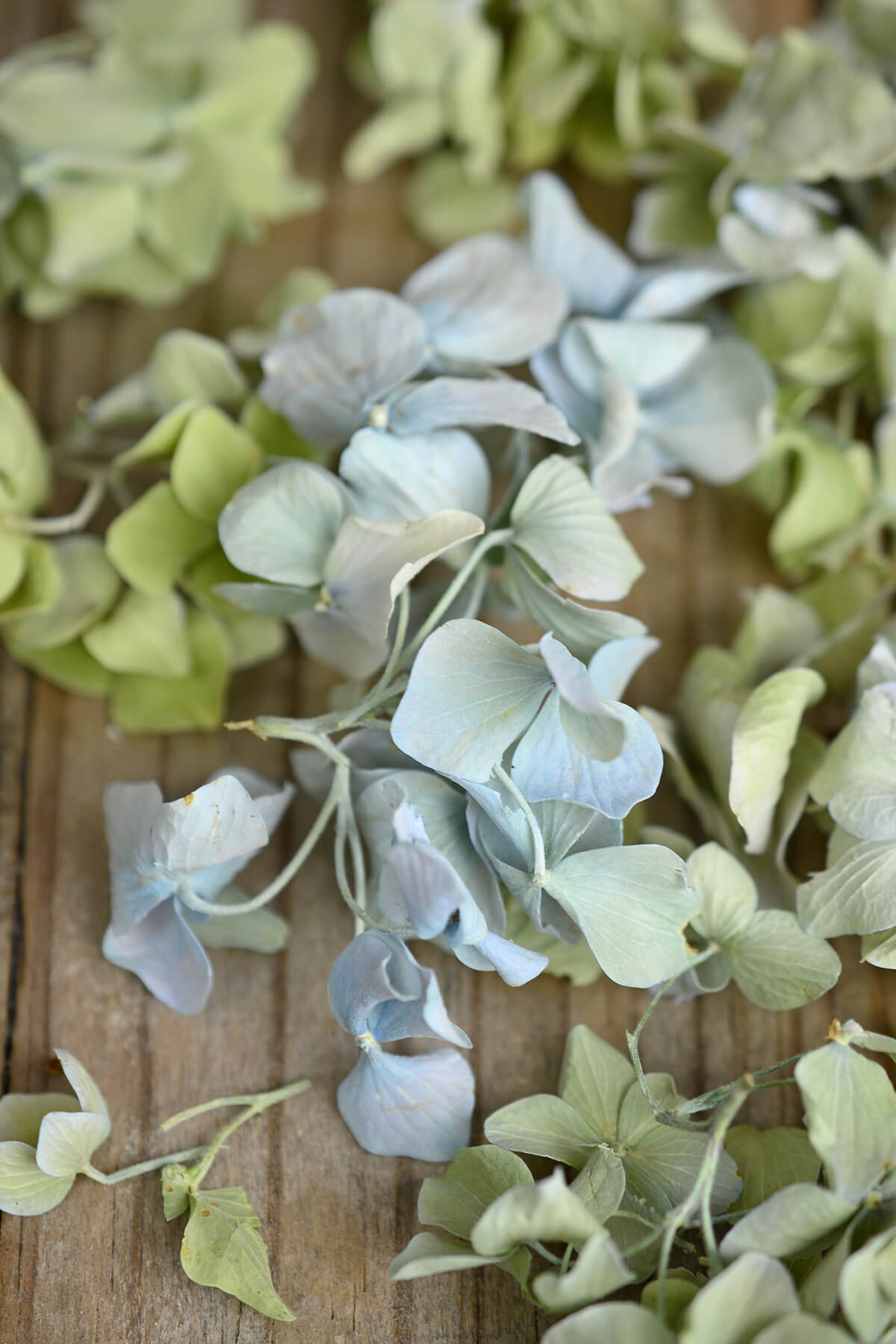 Eco Friendly Preserved Green & Blue Hydrangea Petals- 5 cups
