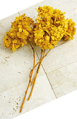 3 Preserved Mango Yellow Hydrangea Flower Stems