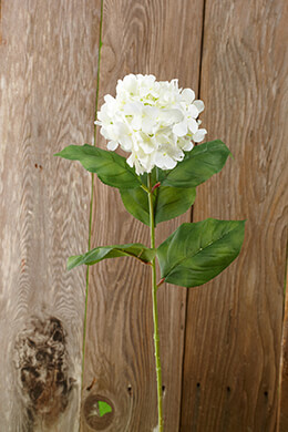 Spray Hydrangea Cream 30in