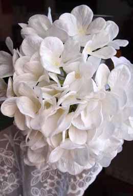 Tall White Lace Hydrangeas Flowers