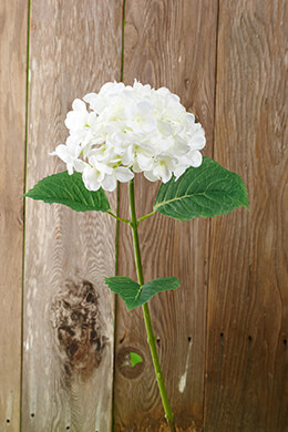 Hydrangea Spray White 30in