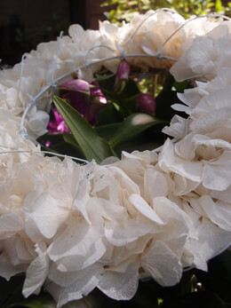 Hydrangea Wreath Preserved Cream 6.5in