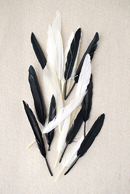 Indian Feathers Black and White 3in (72 feathers)