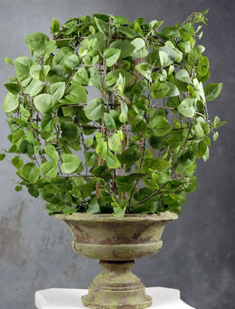 "Ivy Topiary in Pot 18"" Silk Ficus"