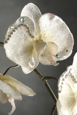 Decorative Orchids White