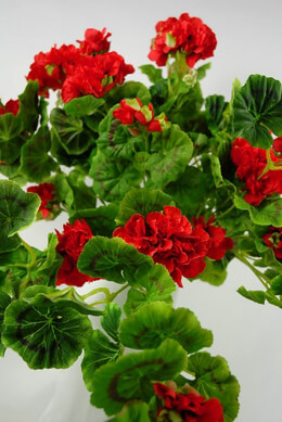 "Large 26"" Geranium Hanging Plants Red"