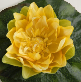 Floating Water Lily Flower Yellow 6.75""