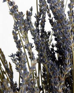 Lavender Flowers 180-200 stems
