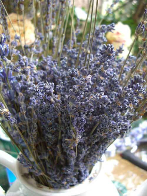 Lavender Flowers Air Dried Premium Blue Fragrant (90+ stems)