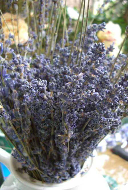Lavender Flowers Air Dried Premium Blue Fragrant (90+ stems)