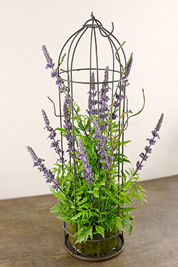 Lavender Plant in Domed Cage 22in