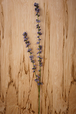 Lavender Blossom Spray 41in