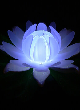 Glow Lily LED Pool Light