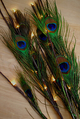 Lighted  Peacock Feathers 39in