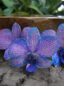 30 Preserved Lilac & Blue Orchid Flowers