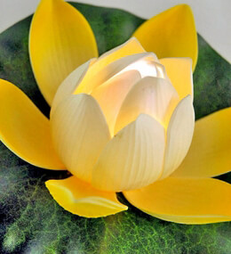 Lily Lights LED Floating Yellow & White