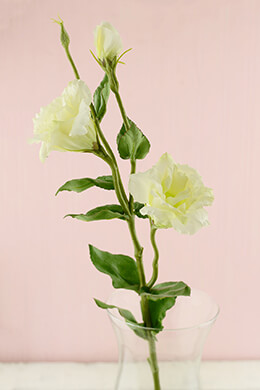 Cream Lisianthus Flowers 25""