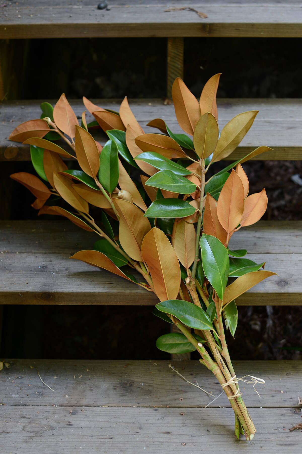 Fresh Magnolia Branches (20 Branches)
