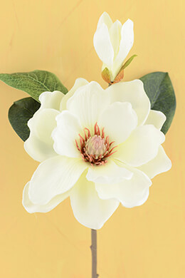 Magnolia Flower Cream 14in