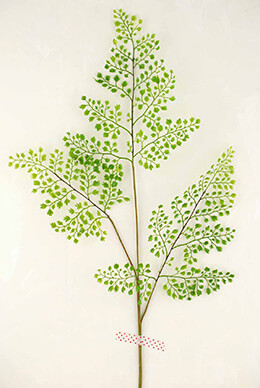 12 Artificial Maidenhair Fern Sprays 34in