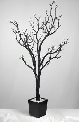 Black 4' Manzanita Trees Potted