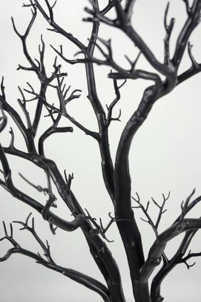 Black Manzanita Wedding Display Tree  4 Feet Potted