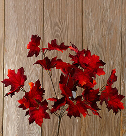 Maple Leaf Bush Red 19in