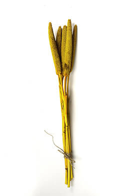 Preserved Yellow Millet Stalks 28""